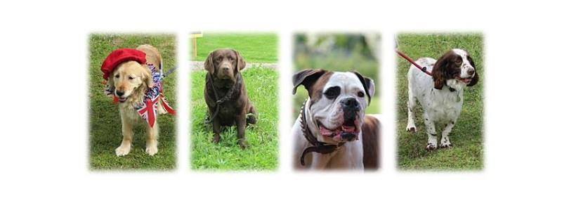 Dog Breed Novelties