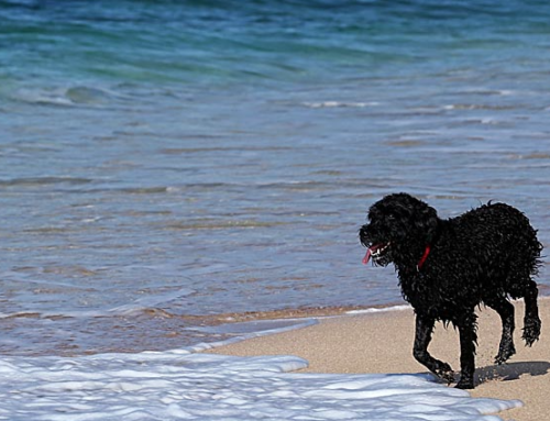Seasonal Dog Restrictions on Weymouth Beach