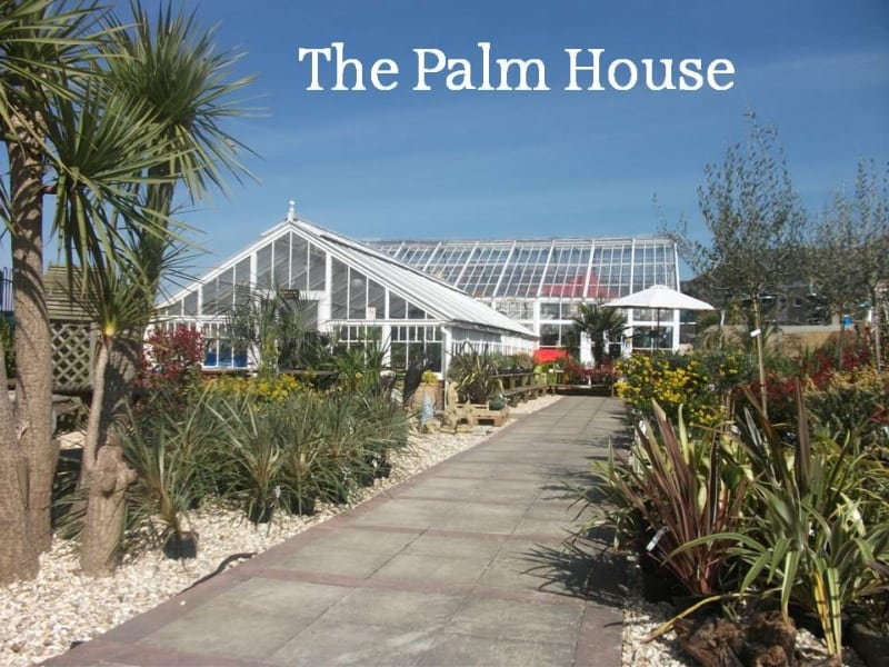 the-palm-house-weymouth